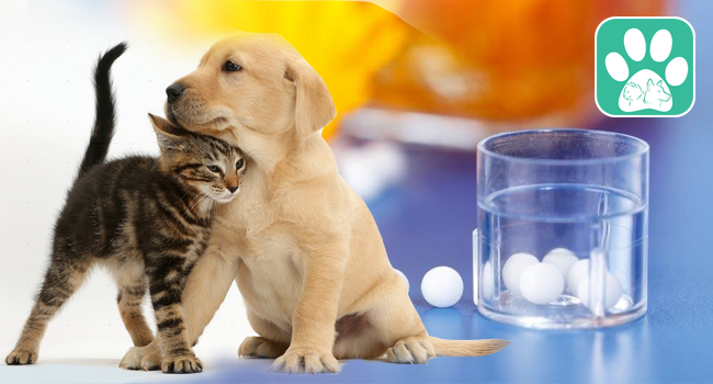 Homeopathy for Animals-Veterinary Homeopathy
